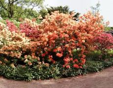 Besuch der Landesgartenschau in Gießen